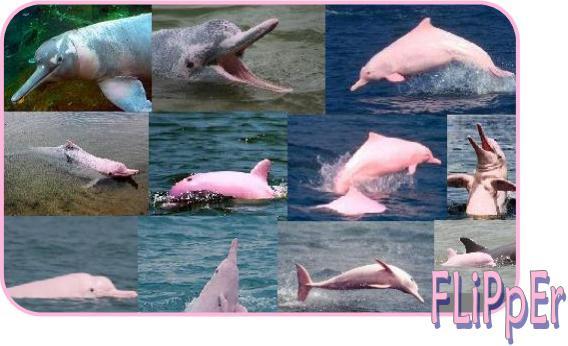 Pinky Flipper
